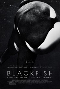 blackfish-large-picture
