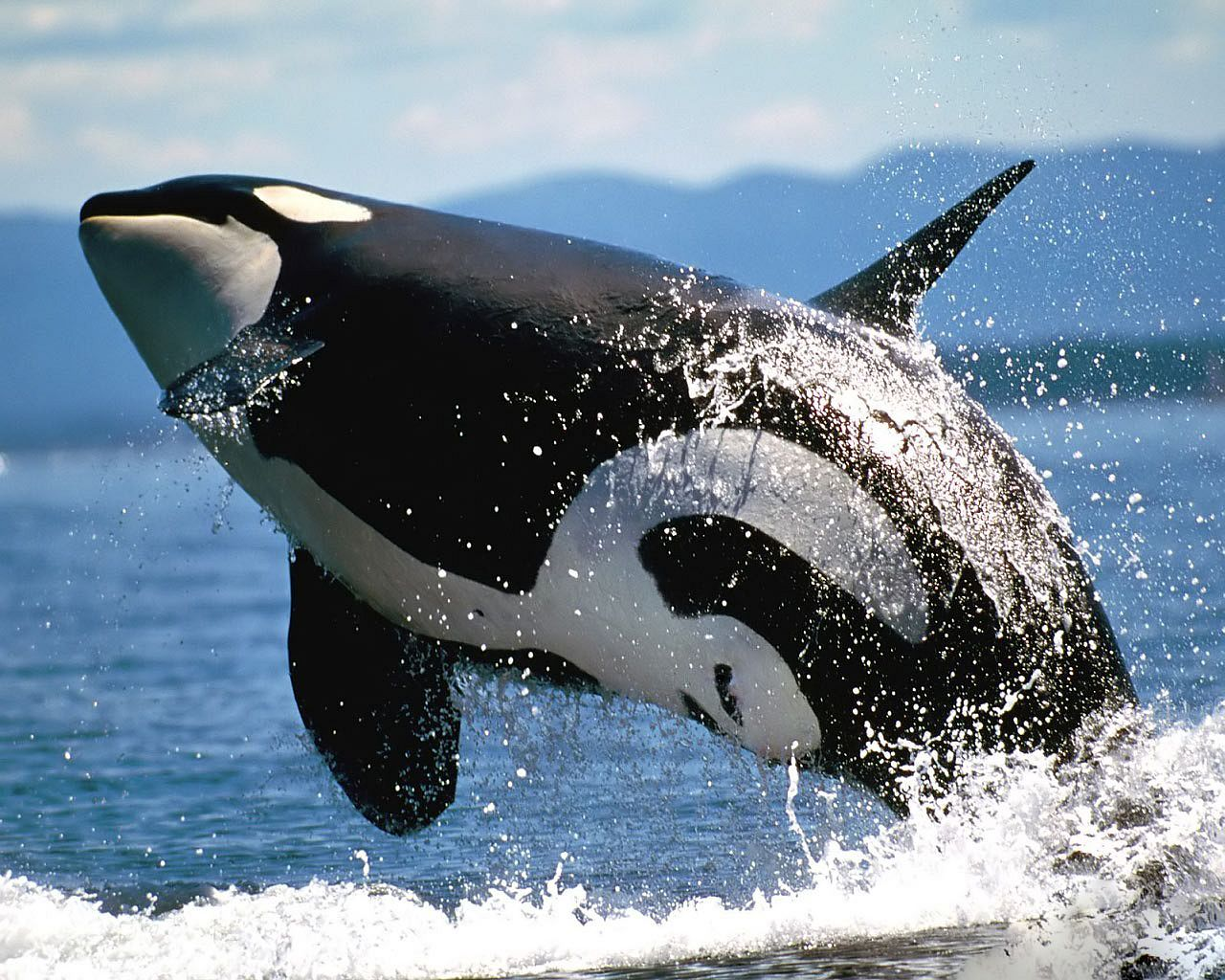 Killer Whale) Windows.jpg