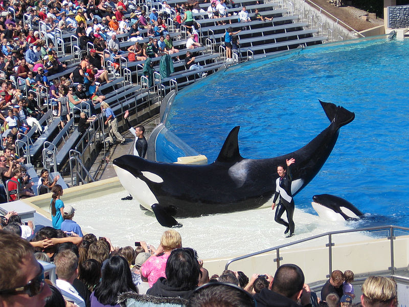 800px-Orcas_at_SeaWorld_show.jpg