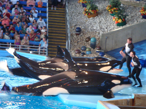 Sea World San Antonio - 18_03_09 (C) C_Harvey_Flickr.jpg