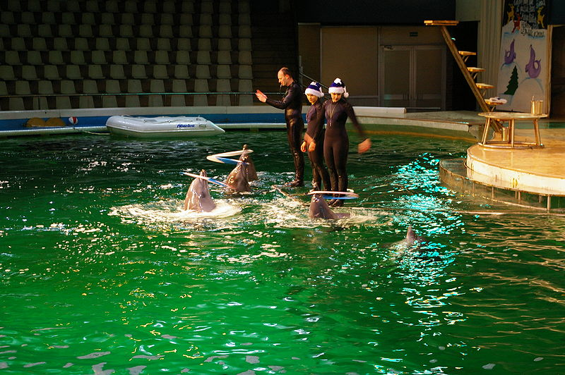 Dolphins_show_in_Dolphinarium_in_Klaipeda_(C)_Troica.jpg