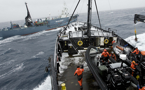Japanese_whaling_vessel_(C)_guano_Flickr 10 10.jpg