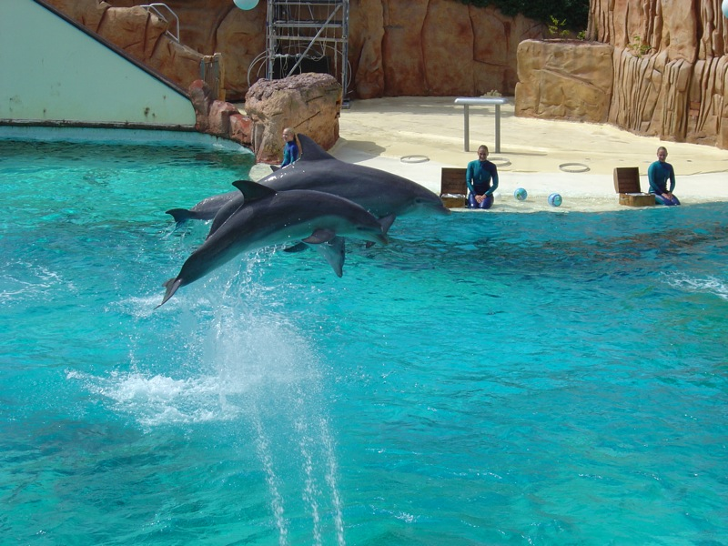 Parc_Asterix_Dolphins_by_http2007.jpg