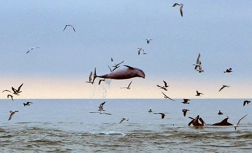 Tursiops-birds (C) Minds-eye-FLickers.jpg