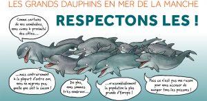 Le Groupe d'Etudes des Cétacés du Cotentin a lancé en 2015 une campagne d'information concernant la présence de grands dauphins au large des côtes normandes (crédit photo : GECC)