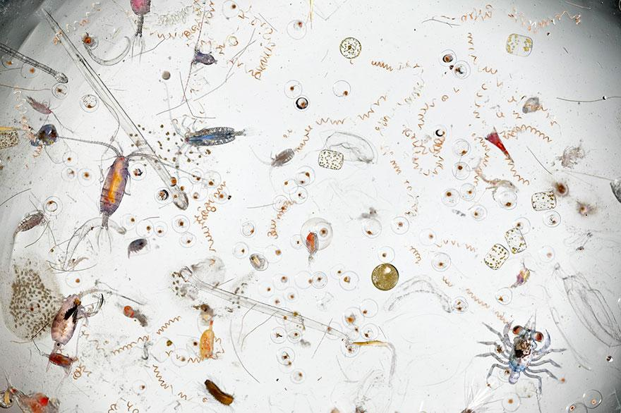 magnified-drop-of-seawater-photo-david-liittschwager-1