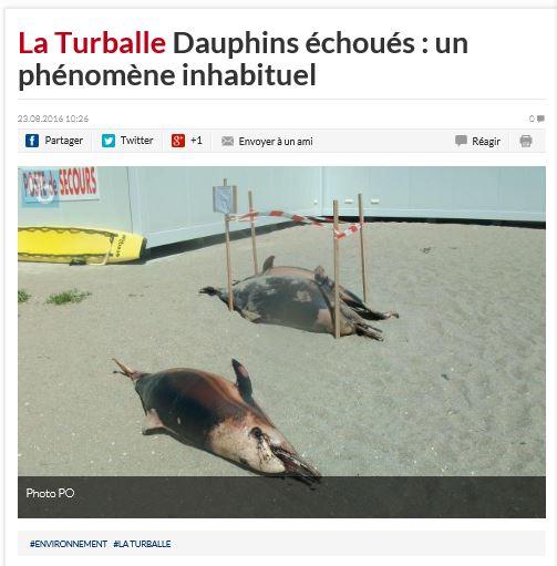 capture-presse-ocean-turballe