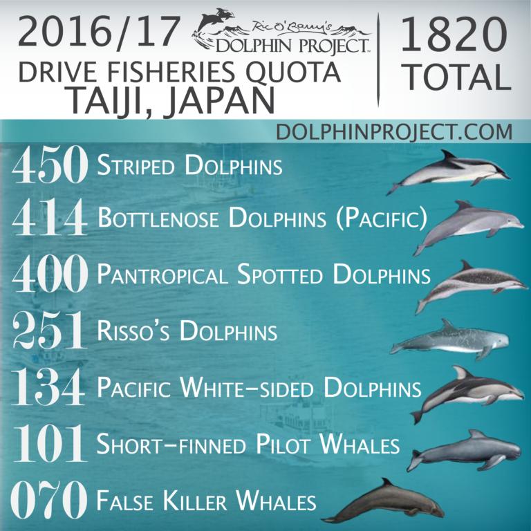 Crédit image : Dolphin Project