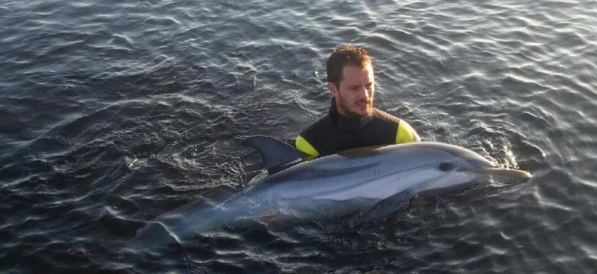 Charly Deregnoncourt est resté une heure dans l'eau avec l'animal - Photo DR
