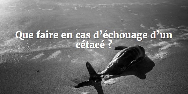 echouages