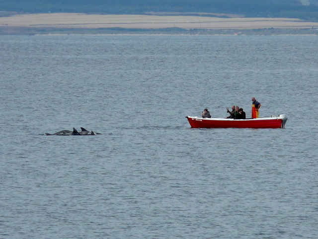 A_treat_for_dolphin_watchers^_-_geograph.org.uk_-_1455349.jpg