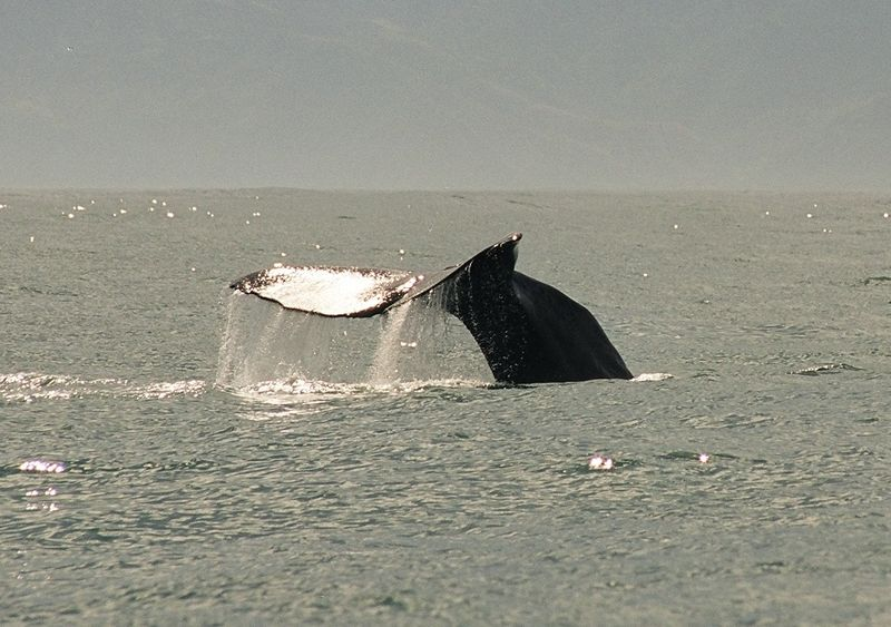 800px-2000-12_Whale_Watching.jpg