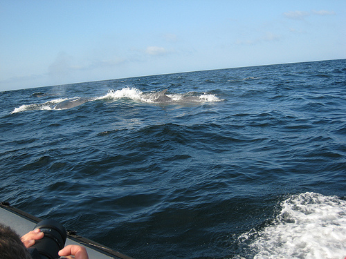 Fin-whale watching-study (C) msprague-Flickr.jpg