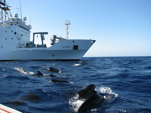 Pilot_whales_surface_near_the_NATO_Research_Vessel_Alliance_during_the_Biological_and_Behavioral_Studies_of_Marine_Mammals_in_the_Western_Mediterranean_Sea_(MED_09)_study_Aug_090807-O-XP494-001 23 08 14.jpg