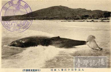 Whale_near_the_beach_of_Cape_Eluanbi,_Hengchun,_TAIWAN.jpg