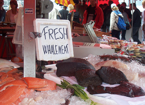 whale meat- (C) davidlewis_Flickr.jpg