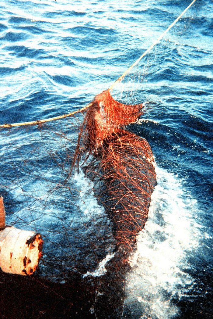 whale-net-Photo_Credit_(C)US_National_Oceanic_and_Atmospheric_Administration.jpg