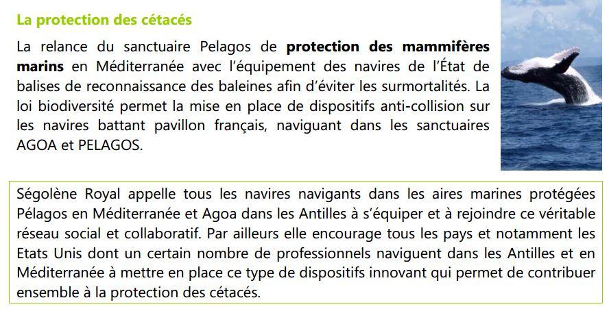 capture-sego-protection-des-cetaces
