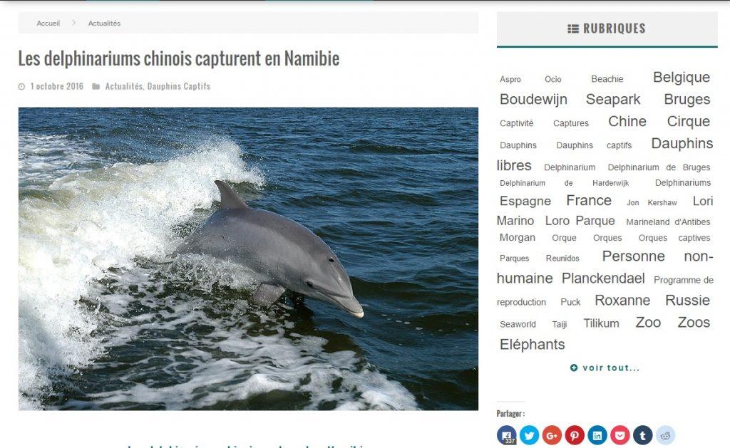 dauphins-namibie