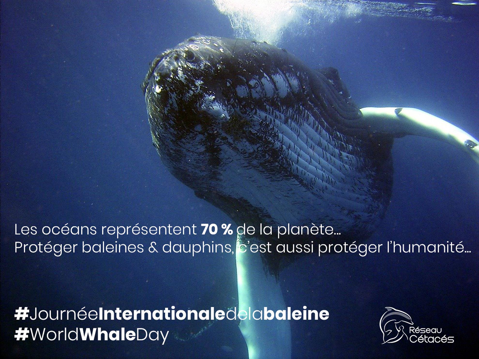"""Résultat de recherche d'images pour """"journée internationale de la baleine"""""""